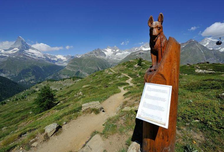 Zermatt Murmelweg c Zermatt Tourismus Michael Portmann.jpg