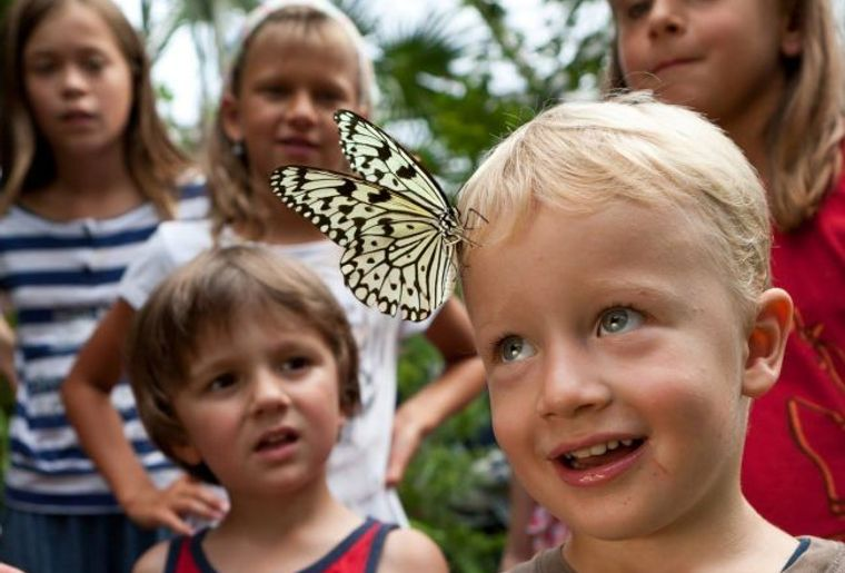 Papiliorama c Papiliorama.jpg