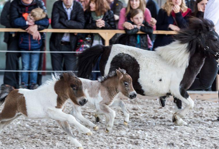 OFFA Pferde.jpg