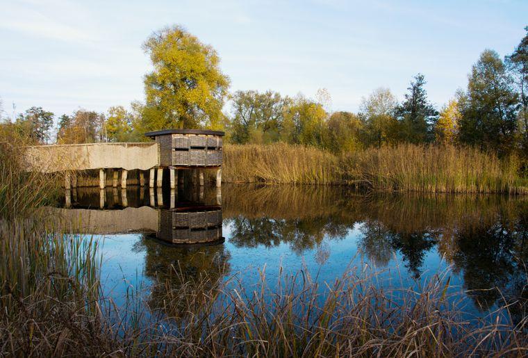 Naturstation Silberweide - Herbst in der Schweiz.jpg