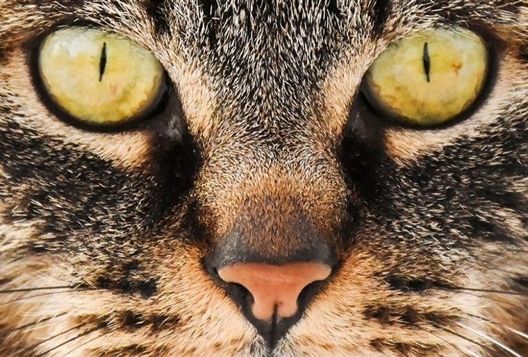Sonderausstellung Katze.jpg