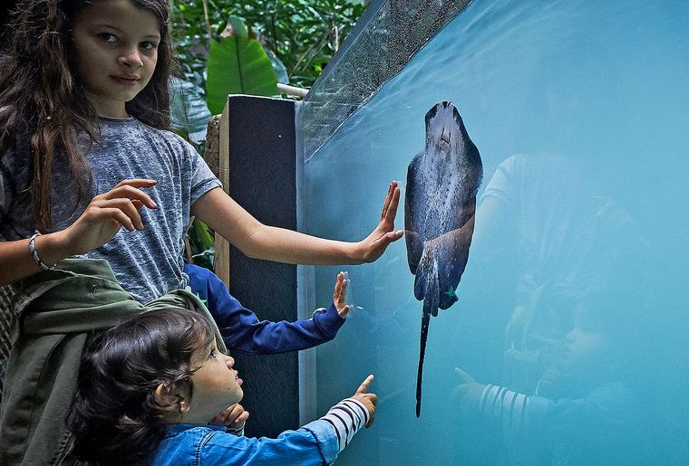 aquatis-aquarium-enfants-raie.jpg