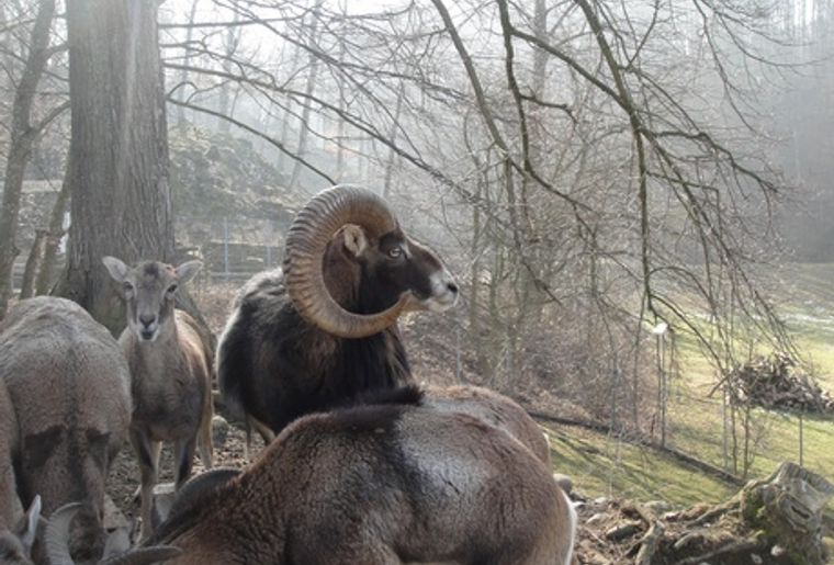 Wildpark Mühletäli 3 c Olten Tourismus.jpg