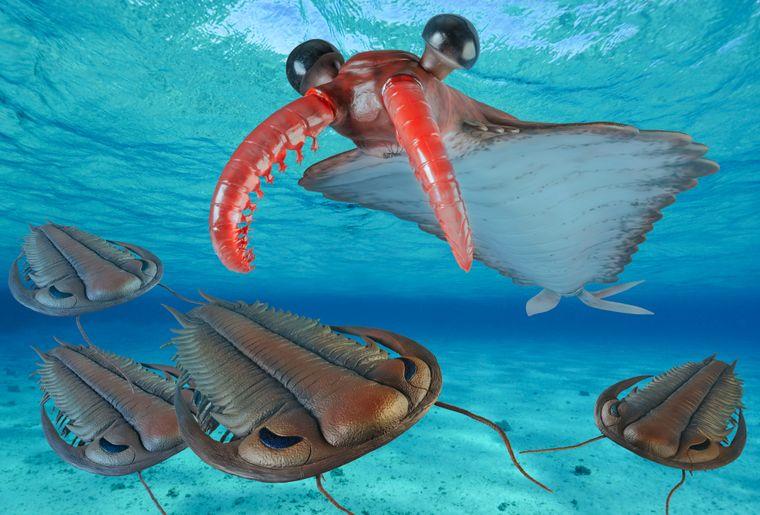 07_Anomalocaris_Trilobiten.jpg