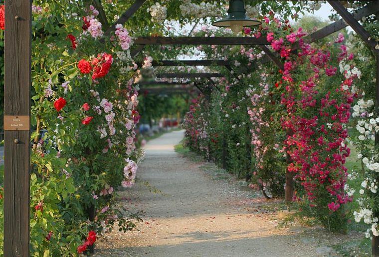 Rosenfestival Estavayer-le-Lac 2.jpg