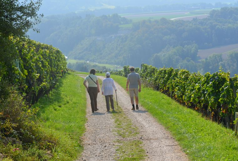 20180830_Weinwanderweg_Wanderung_©Bad Zurzach Tourismus.JPG