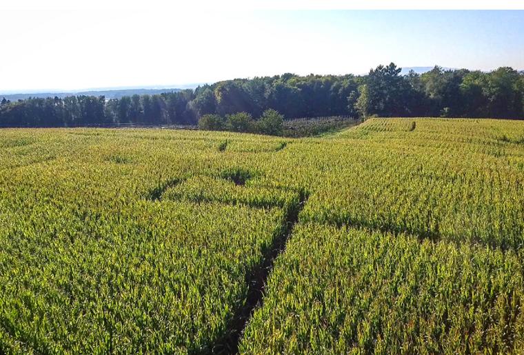 Gut Hügle Maislabyrinth.PNG