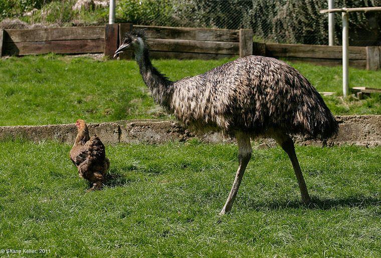 Tierpark Bad Zurzach 1 c Shane Keller.jpg