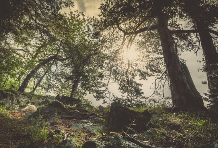 Naturpark Pfyn-Finges c Christian Pfammatter.jpeg