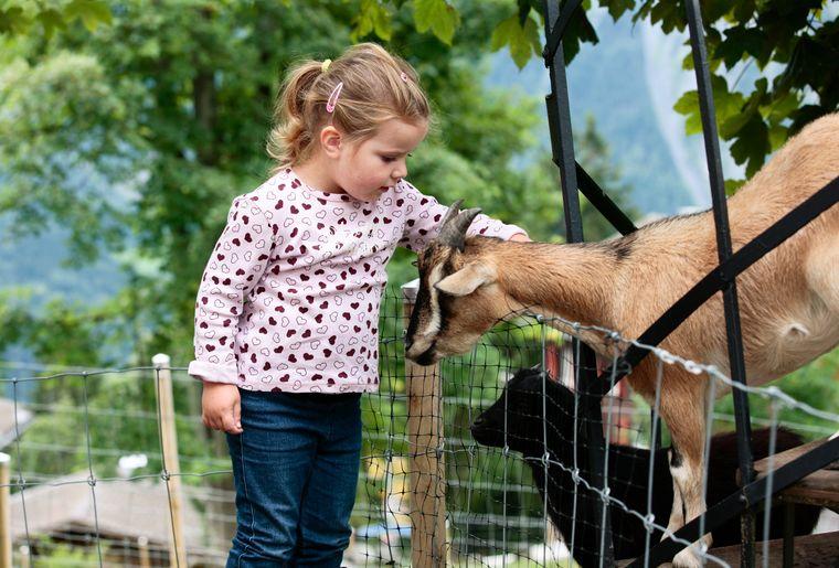 Goats 02.jpg