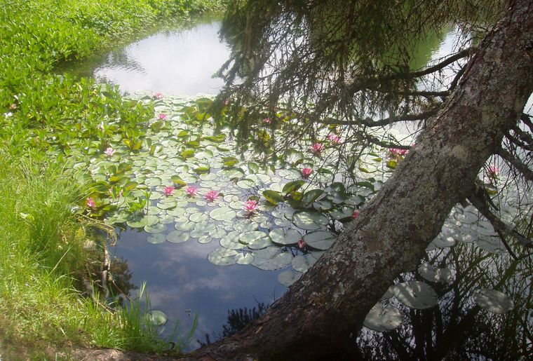 Lac des Joncs 3.jpg