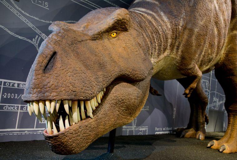 Naturhistorisches Museum Bern Sonderausstellung T. rex 2 c NMBESchäublin.jpg
