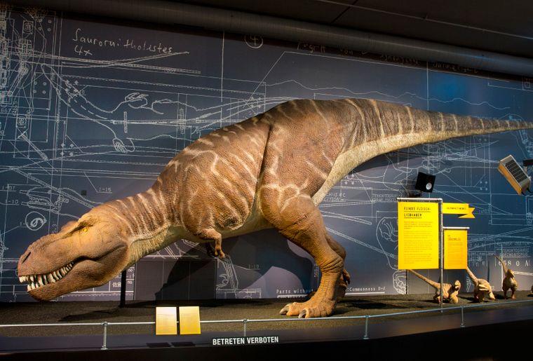 Naturhistorisches Museum Bern Sonderausstellung T. rex 4 c NMBESchäublin.jpg