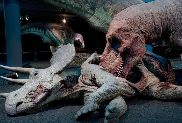 Naturhistorisches Museum Bern Sonderausstellung T. rex c NMBESchäublin.jpg