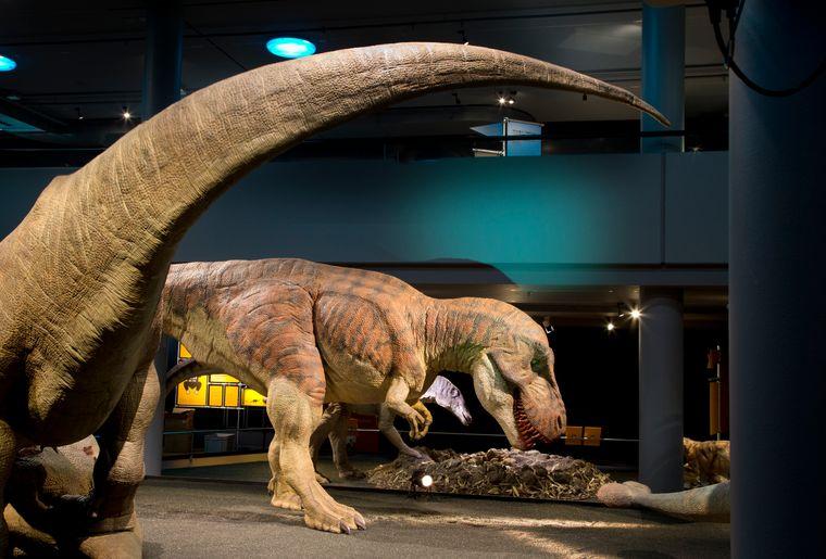 Naturhistorisches Museum Bern Sonderausstellung T. rex 6 c NMBESchäublin.jpg