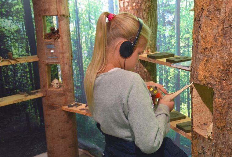 Naturerlebnispark Wildnispark Sihlwald 3.jpeg