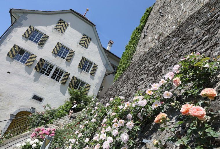 Rosen vor dem Schloss c D. Ruckstuhl.jpg