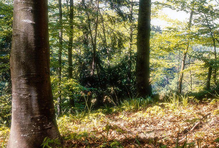 Ausstellung Wald Naturmuseum Thurgau.jpg