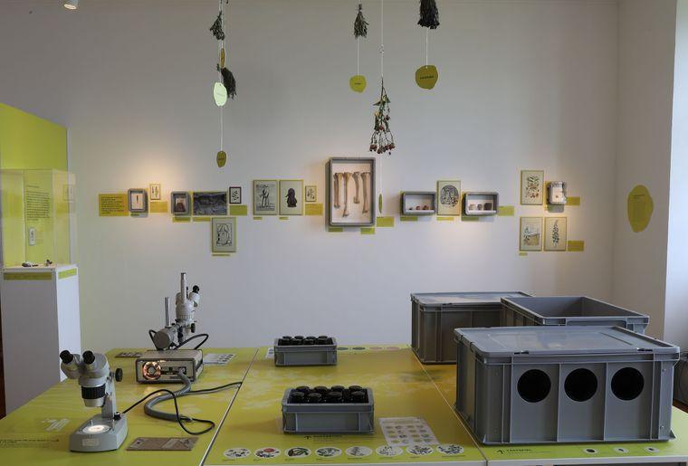 Ausstellung Gesundheit Museum für Urgeschichte 2 c Schloss Heidegg, Dieter Ruckstuhl.jpg