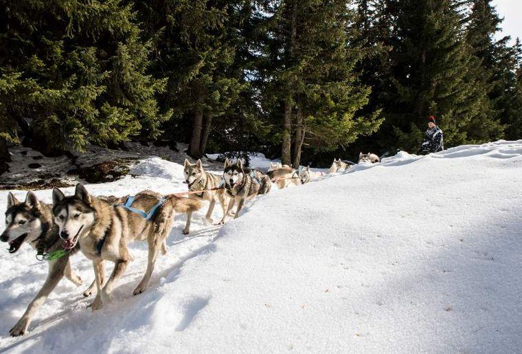 Schlittenhunde Thyon.png