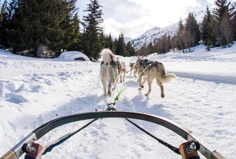Schlittenhunde Thyon 3.png