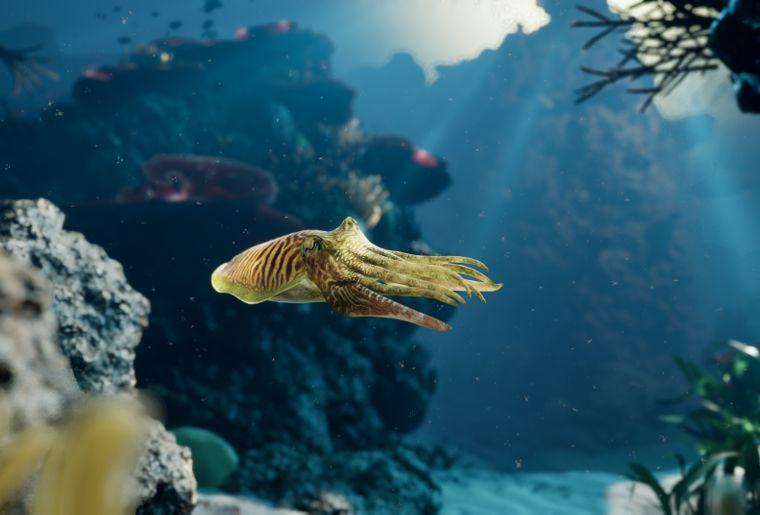 VR-Erlebnis_Reef-Dive_3©somniacs.jpg