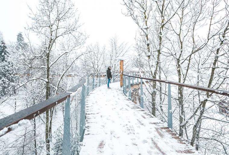 Baumwipfelpfad Winter.jpg