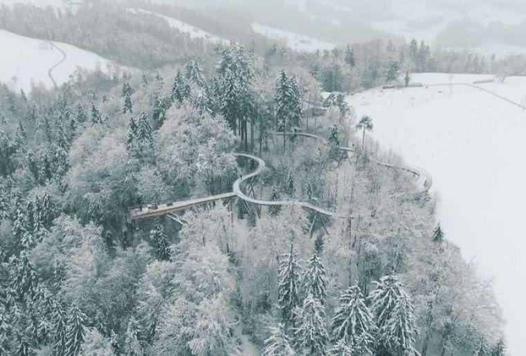 Baumwipfelpfad Winter 4.jpg