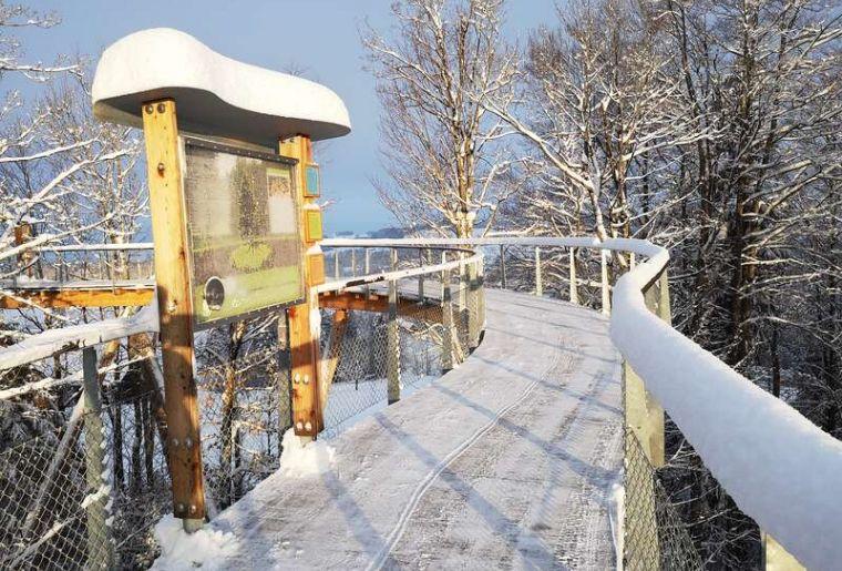 Baumwipfelpfad Winter 3.jpg