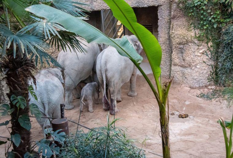 Elefanten c Zoo Zürich, Robert Zingg.jpg