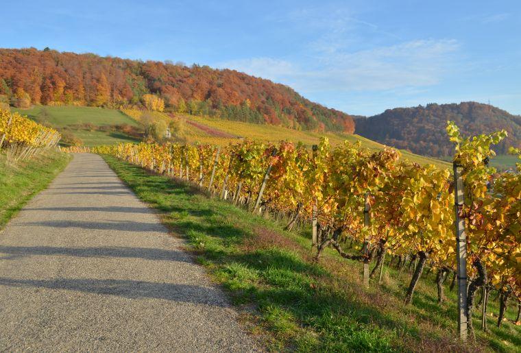 20180830_Weinwanderweg_Raihalde2_©Baumgartner Weinbau.JPG
