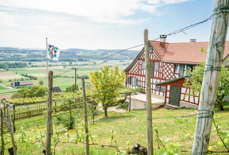 Weinfelden_Weinweg_Reben_Riegelhaus.JPG