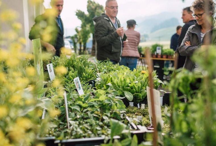 Entlebucher Kräuter- und Wildpflanzenmarkt 2.jpg