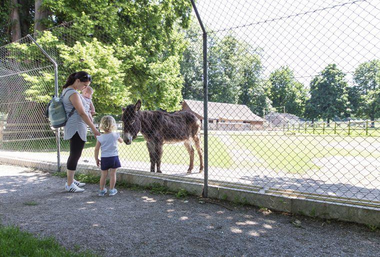 Kreuzlingen_Seeburgpark_Tierpark (5).jpg