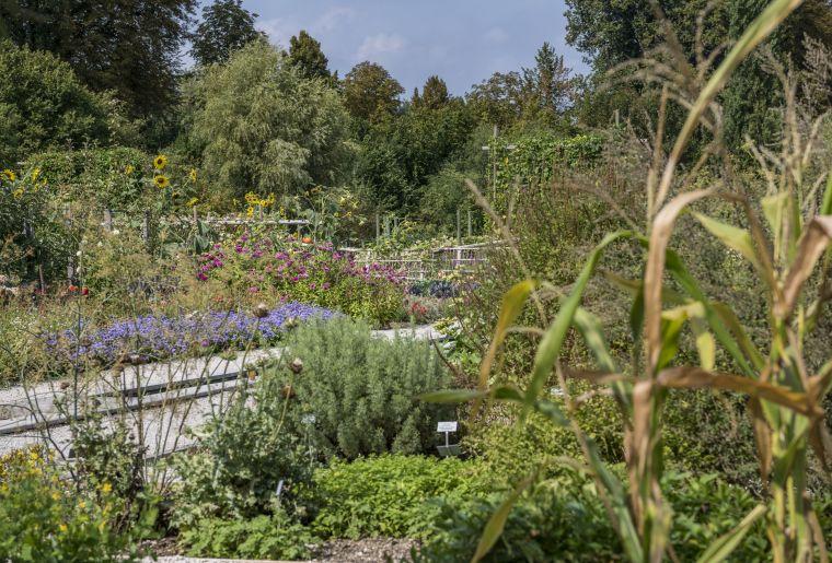Bauerngarten mit seltenen ProSpecieRara-Gemüsesorten c Merian Gärten, Kathrin Schulthess.jpg