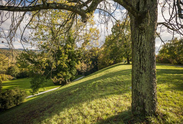 Naturschutzgebiet auf dem Hochplateau oberhalb vom Englischen Garten c Christoph Merian Stiftung, Kathrin Schulthess.jpg