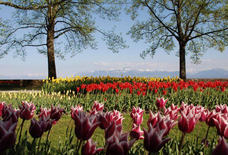Tulpenfest Morges.jpg