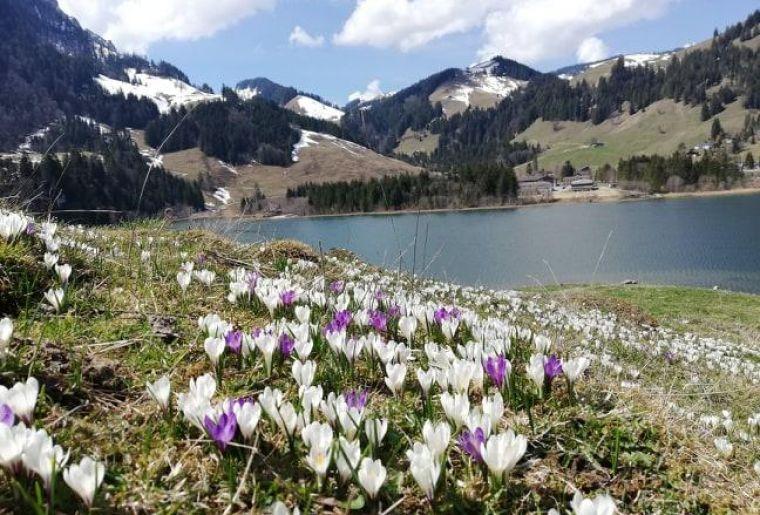Schwarzsee 2.jpg