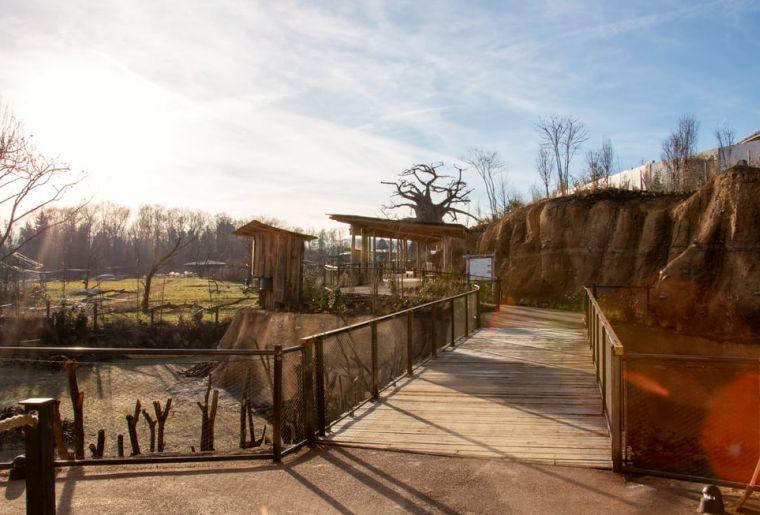 Lewa Savanne c Zoo Zürich, Dominik Ryser | Rita Schlegel.jpg