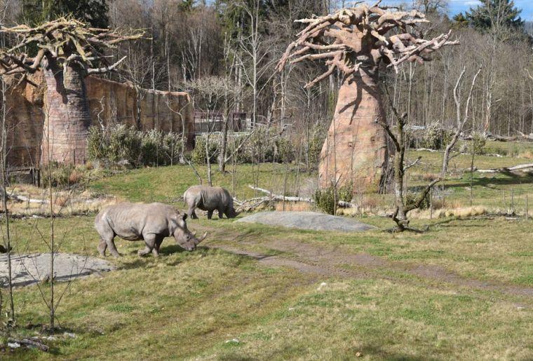 Teshi und Rami c Zoo Zürich, Robert Zingg.jpg