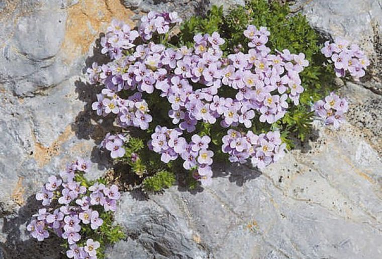 Blumenpfad.jpg