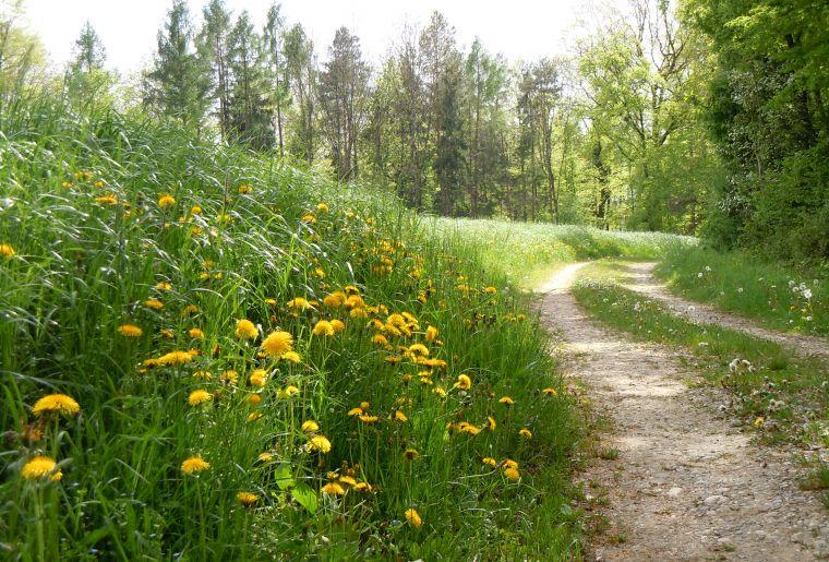 Wandern_Wiese_Weg_DSCN2272.jpg
