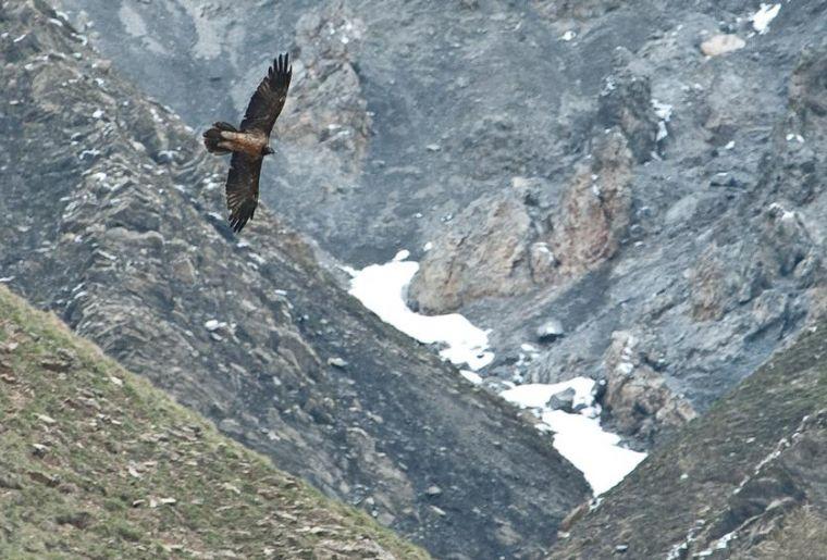 Schweizerischer Nationalpark 2.jpg