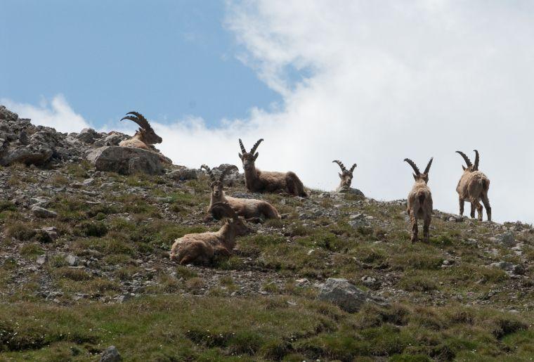 Schweizerischer Nationalpark c Graubünden Ferien SNP.jpg