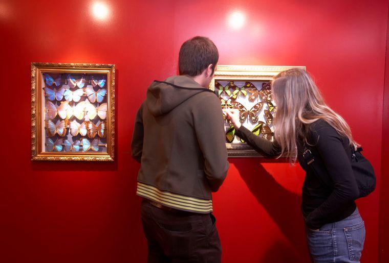 Ausstellung-044_Wunderwelt_Insekten_NML.jpg