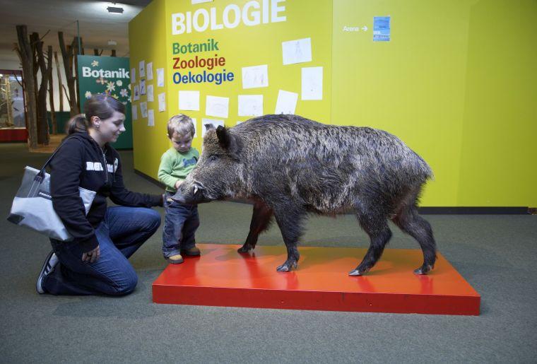 Ausstellung-054_Dauerausstellung_Biologie_NML.jpg