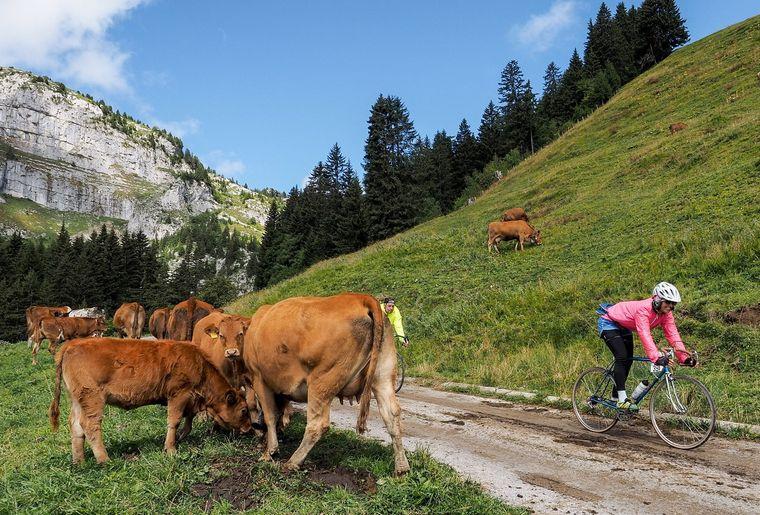 Bergkönig Gstaad.jpg