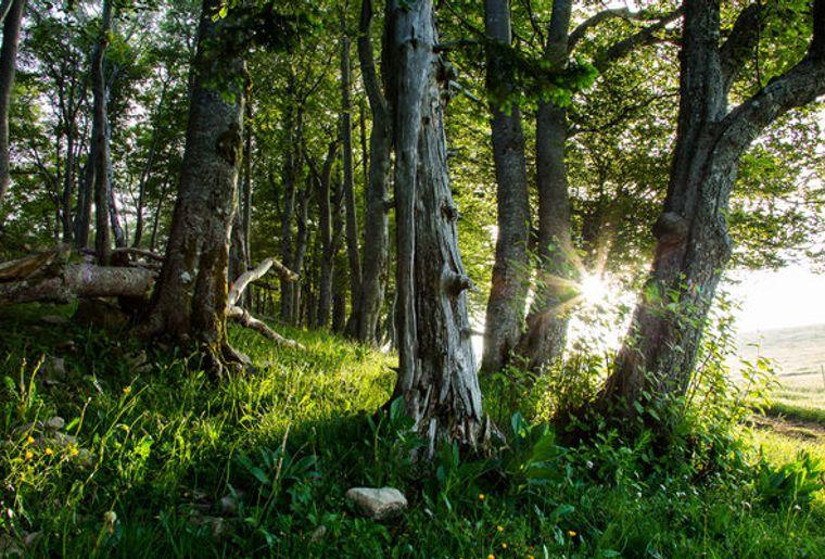 Naturpark_Thal_8_Yves-Matiegka_reference.jpg