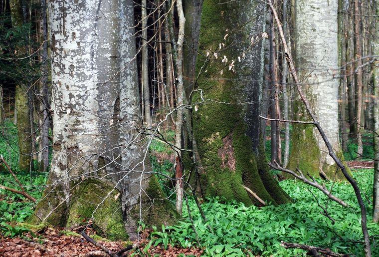 Naturerlebnispark Sihlwald 2.jpeg