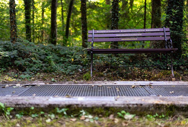 Kunsthaus Sursee Wald 2020_2.jpg